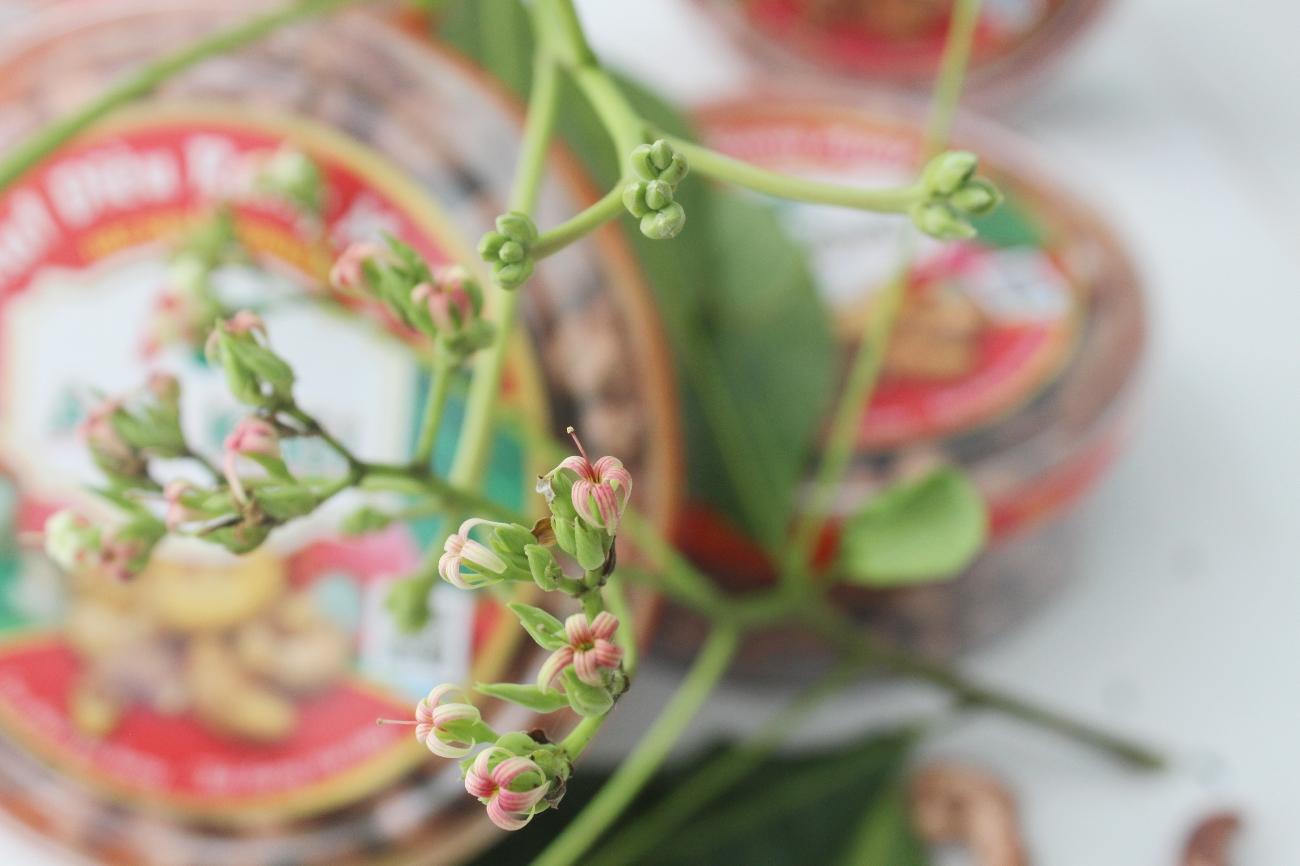 Chia sẻ kỹ thuật trồng cây đinh lăng với mọi người